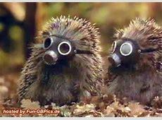 Lustige Tierbilder GB Pic Facebook BilderGB Bilder