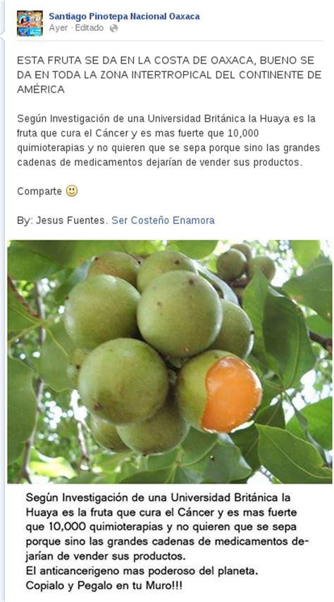 fruta que cura cancer fruta q cura el cancer la fruta que cura el cancer y es