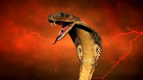 3d Wallpaper King by 3d King Cobra Snake Wallpaper 67 Image Collections Of
