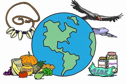 Clipart Science Biodiversity Drawing Earth Biology Stem