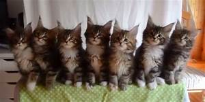 7 Kittens Move In Purr