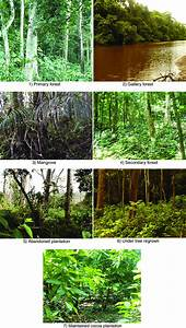 Different Types Of Habitat Inside The Dassioko Sud Forest Reserve