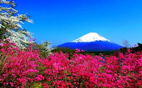 Spring In Japan Wallpapers Hd Free Download Pixelstalknet