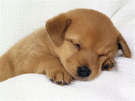 cute puppy dogs photo  fanpop