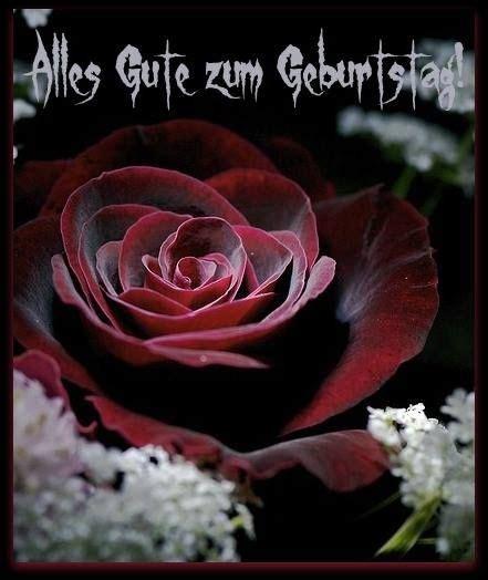 schoene rote rose alles gute zum geburtstag rosen