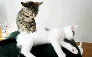 cat chiropractor animal chiropractor olympia