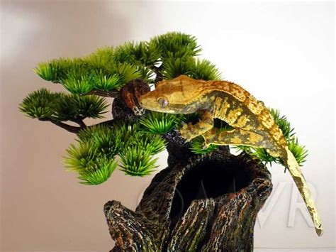 crested gecko lighting 35 best safe bite prevention images on