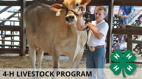 livestock program mississippi state university