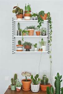 Hängende Pflanzen Aussen : pin von hannah sportiello auf ho pinterest pflanzen kaktus und zimmerpflanzen ~ Sanjose-hotels-ca.com Haus und Dekorationen
