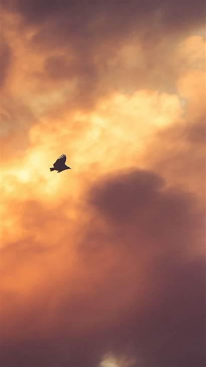 Clouds Fly Iphone Sky Birds Bird Sunset