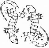 Gecko Lizard Coloring Pages Printable Cute Realistic Geckos Sheets Drawing Cool2bkids Frilled Desert Python Ball Animal Getcolorings Print Colors Preschool sketch template