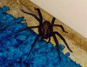 Faire Fuir Les Araignées : eliminez les araign es de votre int rieur l 39 aide de plantes truc astuce pinterest faire ~ Melissatoandfro.com Idées de Décoration