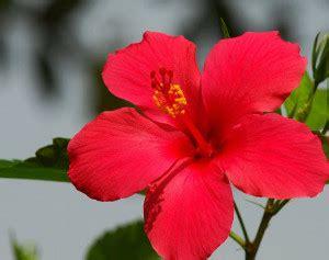 gambar dimensi bunga surpriz menu