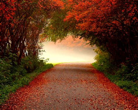 Autumn Wallpapers Free by Cool Pictures Wonderful Autumn Road Wallpapers