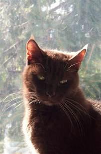 brown cat warriors
