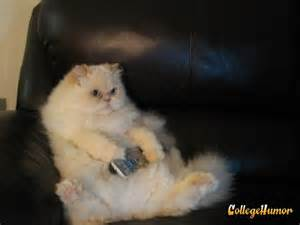 tv for cats cat watches tv collegehumor post