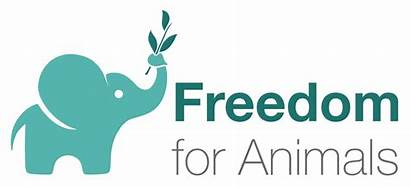 Freedom Animals Charity Animal Protection Wikipedia Rights