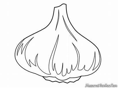 Bawang Gambar Mewarnai Tanaman Coloring Garlic