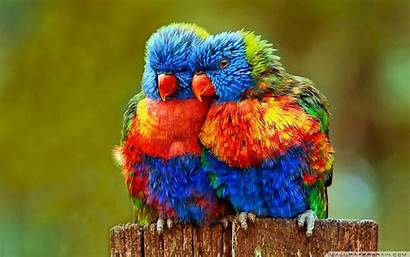 Birds Wallpapers Embed Code Wallpapertag