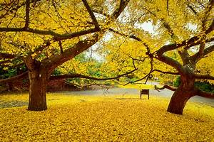 Pointillistic Impressionism at Autumn's End – California ...  Fall