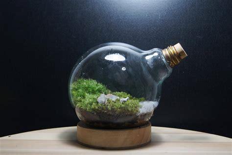 วิธีดูแลสวนขวดแก้ว   www.Miniature garden.wordprcss