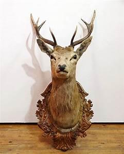 Tete De Cerf Bois : t te de cerf empaill e support en bois sculpt for t noire ~ Teatrodelosmanantiales.com Idées de Décoration