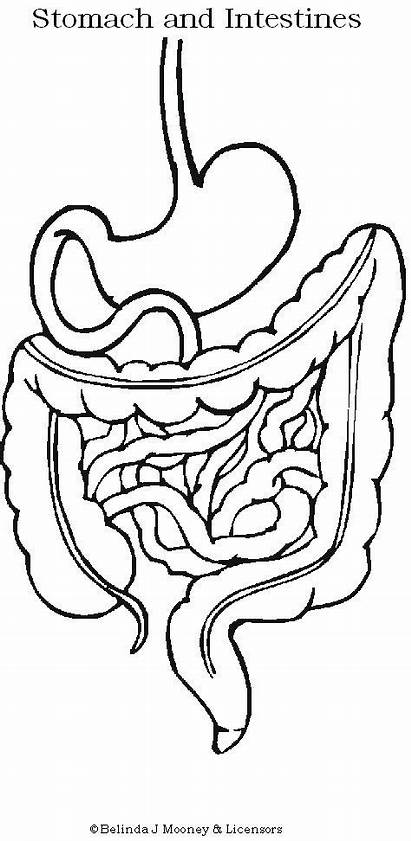 Coloring Stomach Human Intestine Drawing Systems Digestive