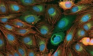 Imagexpress Nano  Fluorescence Microscopy  Automated