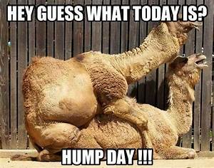 The 25+ best Wednesday hump day ideas on Pinterest   Hump ...