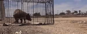 chien en danger With ordinary les danger a la maison 17 les hamsters pour tout savoir sur les hamsters