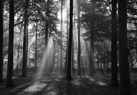 Fototapete Wald Schwarz Weiß by Fototapete 97006 Wald Gr 246 223 E 350x260 Cm In 7 Bahnen