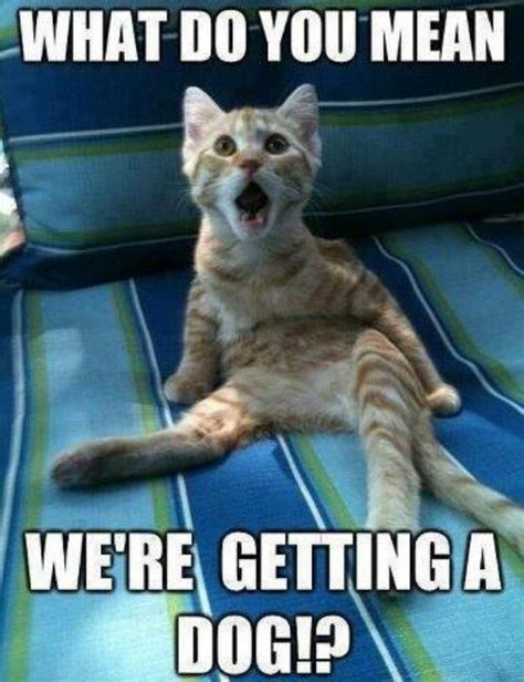 Funniest Cat Memes - top 30 funny animal memes and quotes quotes and humor