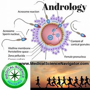 This Board For Male Reproductive Physiology Includes
