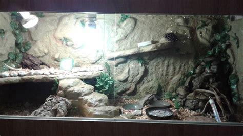 budowa terrarium dla agamy brodatej youtube