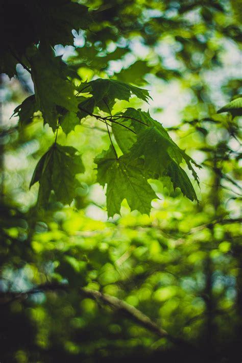 green  orange leaves focus photography  stock photo