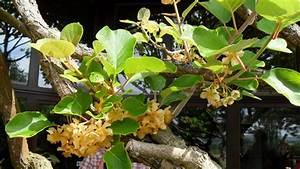 L Arbre Du Kiwi : nous retournons voir l 39 arbre kiwis afin de ecole du dehors ~ Melissatoandfro.com Idées de Décoration