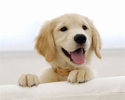 Puppies Cool Puppy Dog Dogs Wallpapers Animal