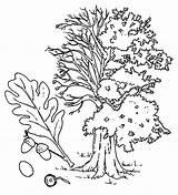 Coloring Oak Tree Nature Pear Landscape Winter sketch template
