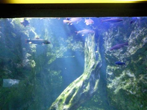 visite aquarium du grand lyon