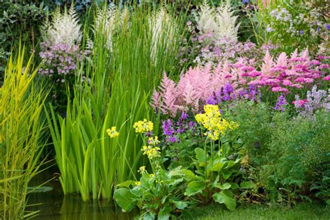 A Fabulous Plant Combination For Moist Soils And Shady Gardens