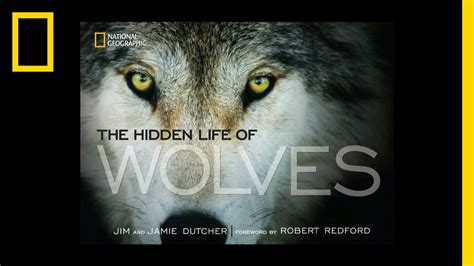 National Geographic Wolf