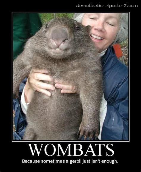 Wombat Memes - wombats because sometimes a gerbil just isn t enough motivational poster