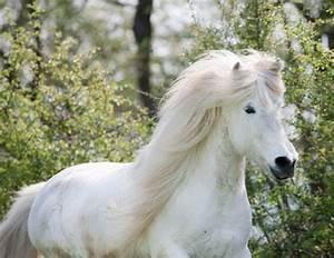 Welche Farbe Passt Zu Hellbraun : welche pferderasse passt zu mir ~ Yasmunasinghe.com Haus und Dekorationen