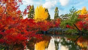 Bridge, In, Autumn, Park, Fond, D, U0026, 39, U00e9cran, Hd