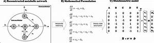 1  Mathematical Formulation Of A Simple Metabolic Pathway