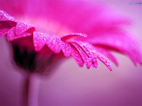 Flowers Images Lovely-ness Hd Wallpaper And Background