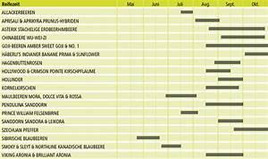Welche Kräuter Passen Zusammen Tabelle : maibeere r amur s h berli fruchtpflanzen ag neukirch egnach ~ Frokenaadalensverden.com Haus und Dekorationen