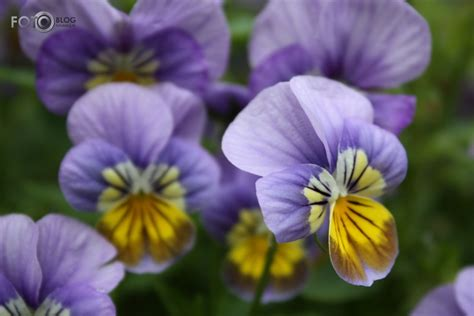 fotOblog.ninja - Vasaras ziedi / ciimaniite / Daba ...