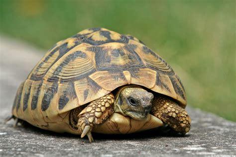 tartarughe pensione  tartarughe