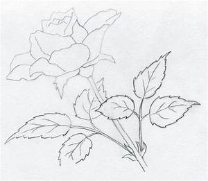 How To Draw A Rose ~ Mulberry